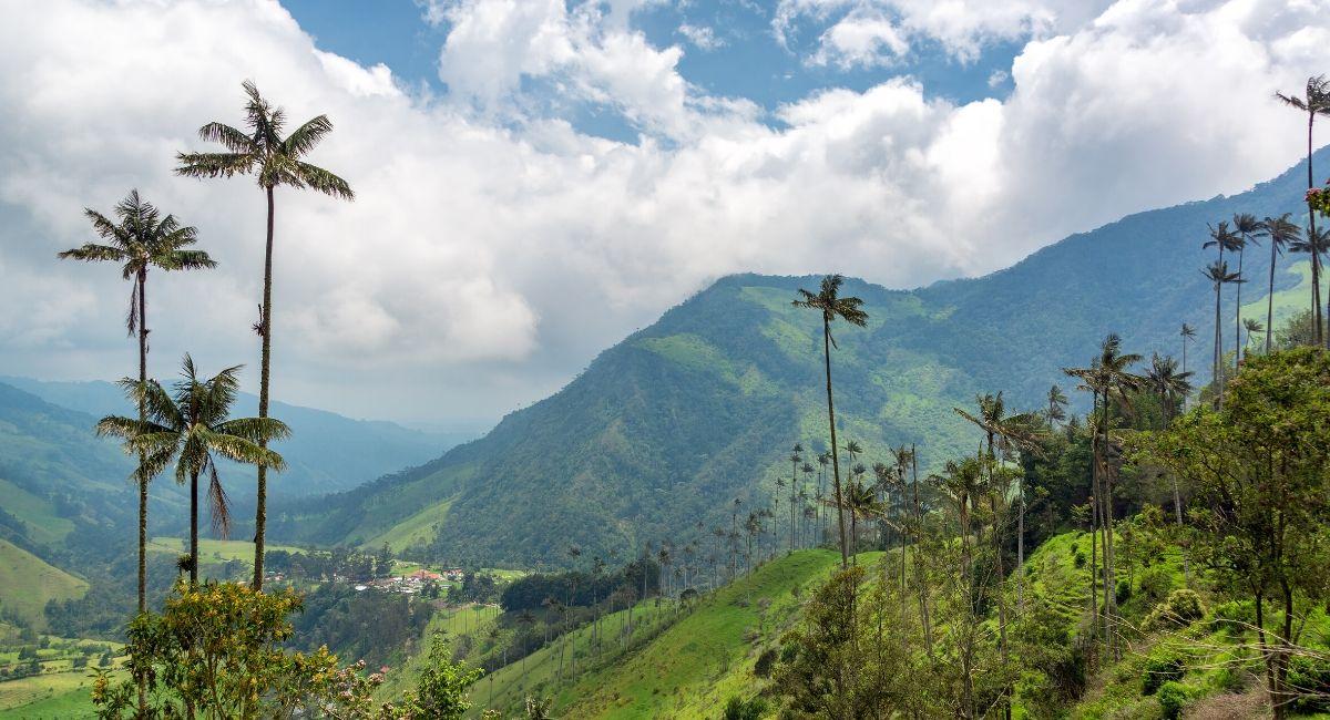 Arbre National Colombie